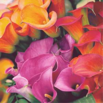 Image de COLORFUL BLOOM - LUNCHEON NAPKINS