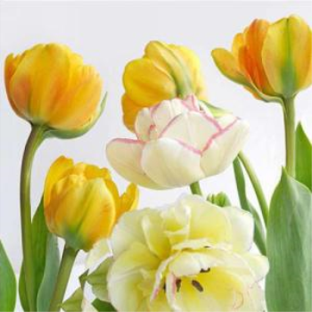 Picture of YELLOW TULIPS LUNCHEON NAPKINS