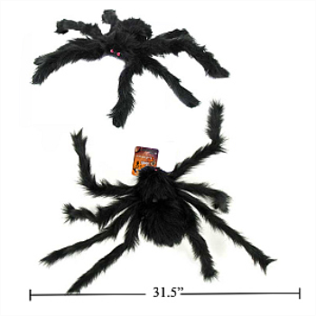Picture of GIANT BLACK FURRY SPIDER