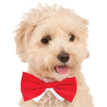 Image de RED BOWTIE - SMALL/MEDIUM