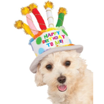 Image de BIRTHDAY CAKE HAT - MEDIUM/LARGE