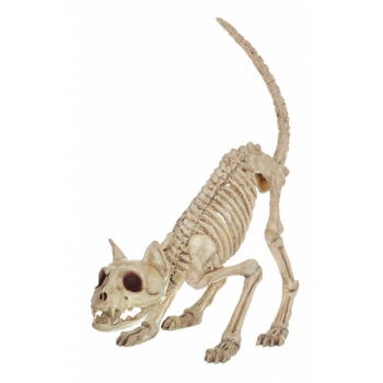 Picture of CAT SKELETON