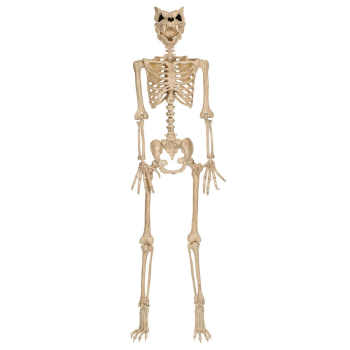 "Picture of 64"" WEREWOLF SKELETON"