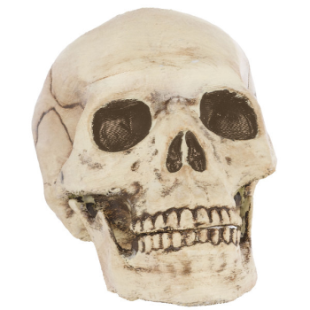 Picture of PLASTIC SKULL - JOINTED MOUTH