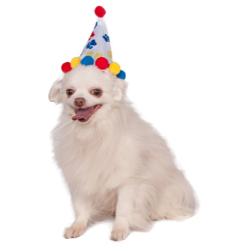 Image de PAW PRINT BIRTHDAY HAT - SMALL/MEDIUM
