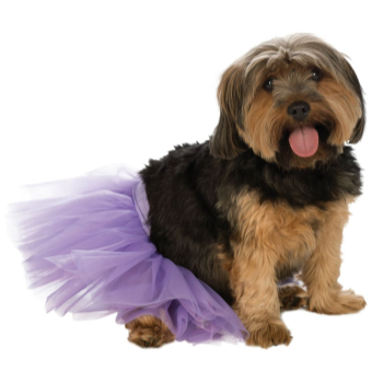 Image de PURPLE TUTU - SMALL/MEDIUM
