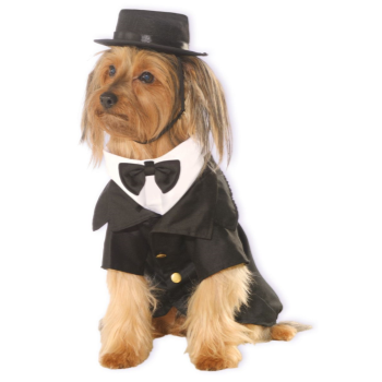 Image de DAPPER DOG - LARGE