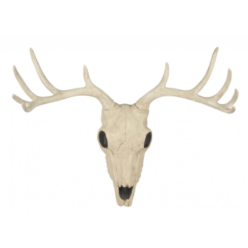 "Picture of 21"" BUCK SKULL"