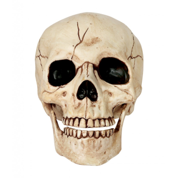 """Image de SKULL WITH MOVEABLE JAW - 6"""""""