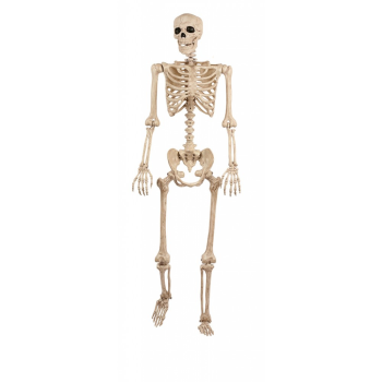 Picture of LIFE SIZE SKELETON - POSABLE 5'