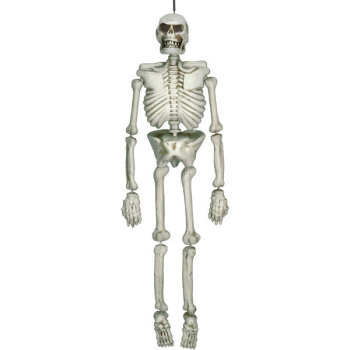 Picture of SKELETON PLASTIC - 5'